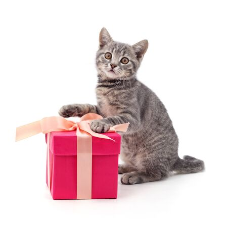 Kitten and gift isolated on a white background.