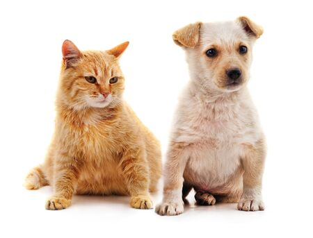 Puppy and kitten isolated on a white background. Foto de archivo