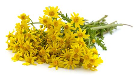 Bouquet of yellow daisies isolated on a white background.
