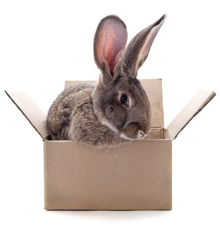 One brown rabbit in box isolated on a white background. Foto de archivo