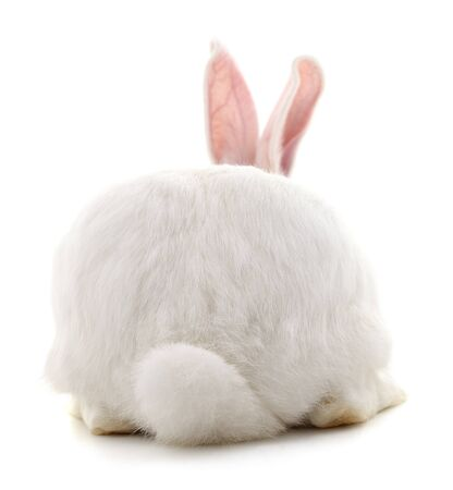 The back of a white rabbit isolated on a white background.