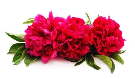 One bouquet of the peony isolated on a white background. Foto de archivo