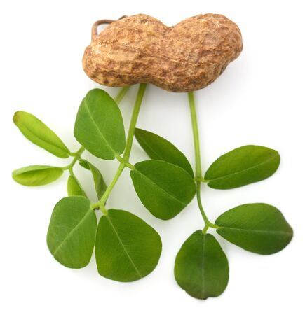 Peanuts and leaves isolated on a white background.
