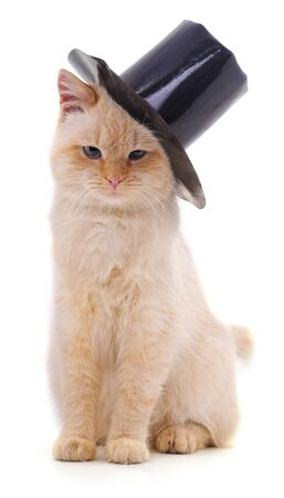 Cat in hat isolated on a white background. Foto de archivo