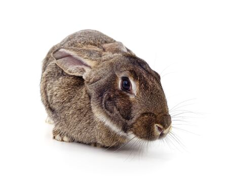 One small brown rabbit isolated on a white background.