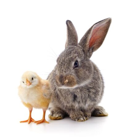 Chicken and rabbit isolated on a white background.