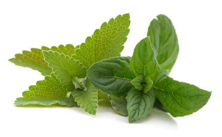 Leaves of green mint isolated on a white background. 版權商用圖片