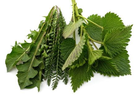 Nettles, yarrow and dandelion isolated on a white background.