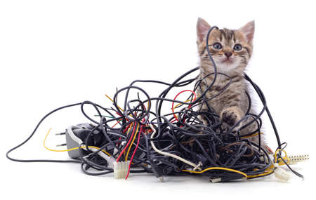 Kitten and a pile of gnawed wires isolated on a white background. Reklamní fotografie