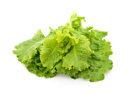 Fresh lettuce leaves isolated on a white background.