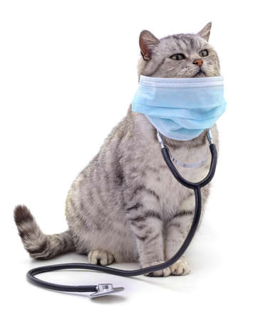 Cat in medical mask isolated on white background. Stock Photo