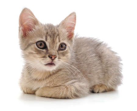 One little kitten isolated on a white background.