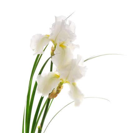 Bouquet of white irises on a white background.