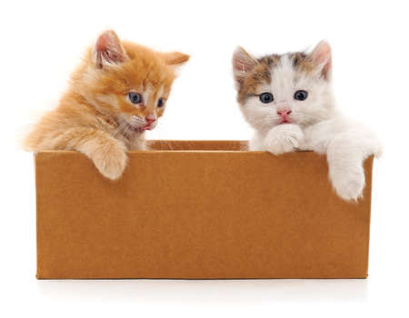 Kittens in box isolated on a white background.
