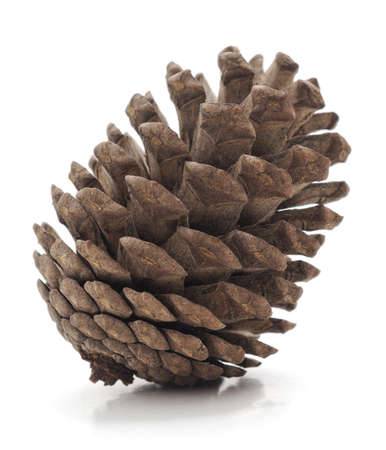 One pine cones isolated on a white background.
