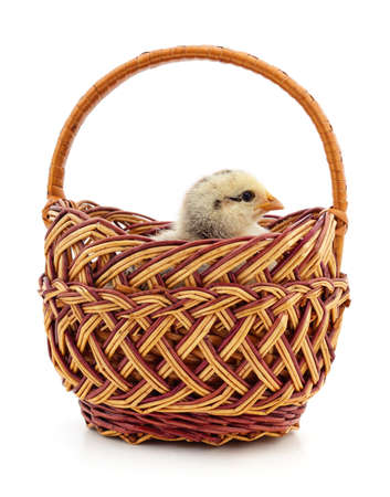 Chicken in the basket isolated on a white background.