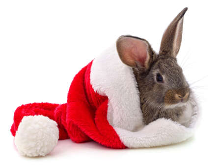 Rabbit in a Christmas hat isolated on a white background. 版權商用圖片