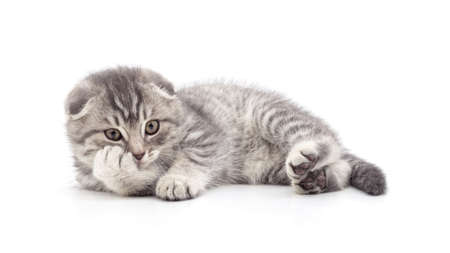 One little kitten isolated on a white background. Banque d'images