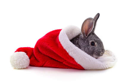 Rabbit in a Christmas hat isolated on a white background.