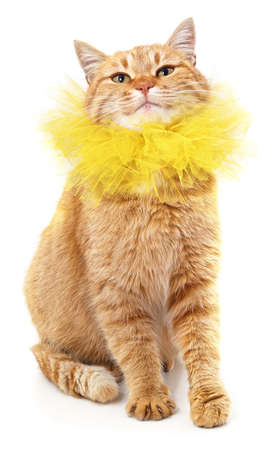 Red cat in a yellow collar isolated on a white background. Standard-Bild