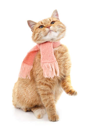 Cat in a knitted scarf looks up isolated on a white background. Standard-Bild