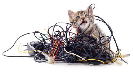 Kitten and a pile of gnawed wires isolated on a white background.