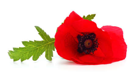 Red poppy flower isolated on a white background. 免版税图像
