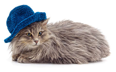Red cat in a knitted hat isolated on a white background.