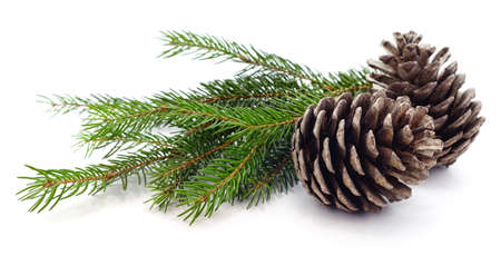 Cones and christmas tree isolated on a white background.