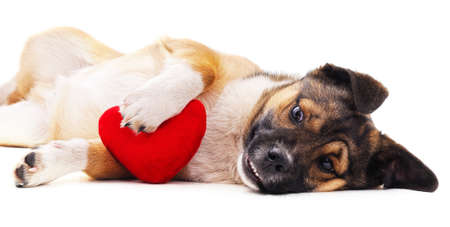 Puppy and heart isolated on a white background.