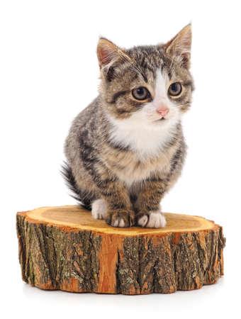 Kitten on the stump isolated on white background.
