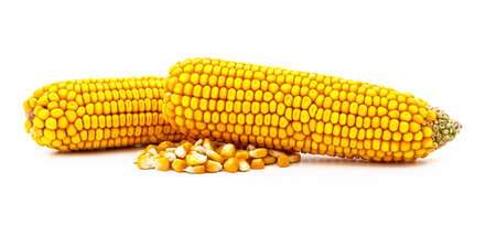 Cobs of ripe corn isolated on a white background. 免版税图像