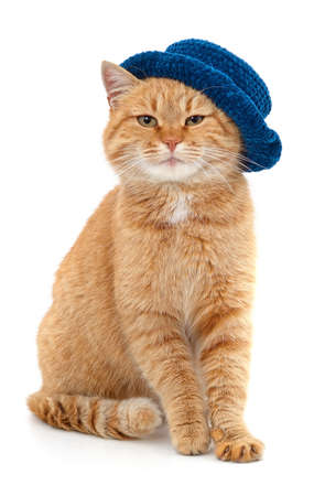 Red cat in a blue hat sits isolated on a white background.