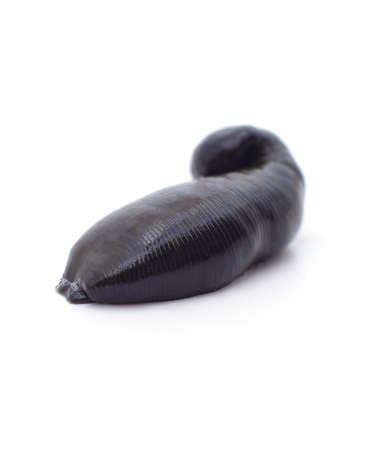 One big black leech isolated on a white background. 免版税图像