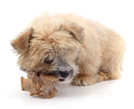 Dog and bone isolated on a white background.