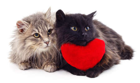 Two cats and red heart isolated on white background.