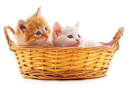 Red and white kitten in a basket isolated on a white background.