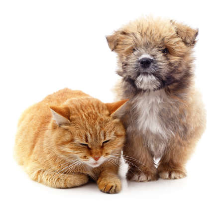 Red cat and brown puppy isolated on a white background.