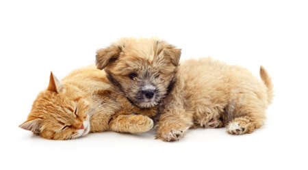 Cat sleeping near puppy isolated on a white background.