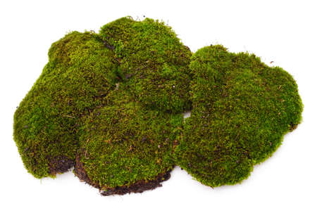 Bunch of green moss isolated on a white background.