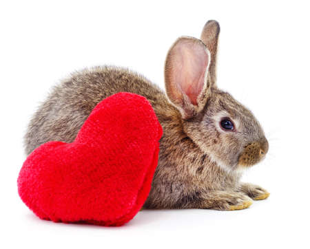 One brown rabbit and heart isolated on a white background.