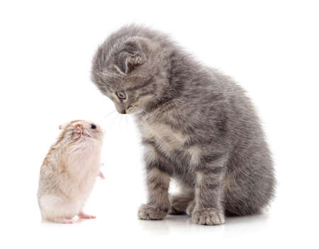 Kitten and hamster isolated on a white background. 免版税图像