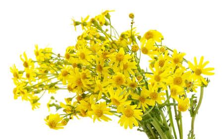 Yellow wild flowers isolated on white background.