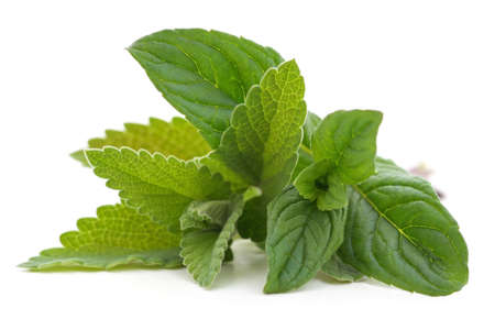 Mint and lemon balm leaves isolated on a white background. 免版税图像