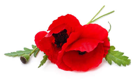 Red poppies isolated on a white background. 免版税图像