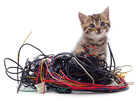 Kitten and a pile of gnawed wires isolated on a white background. 免版税图像