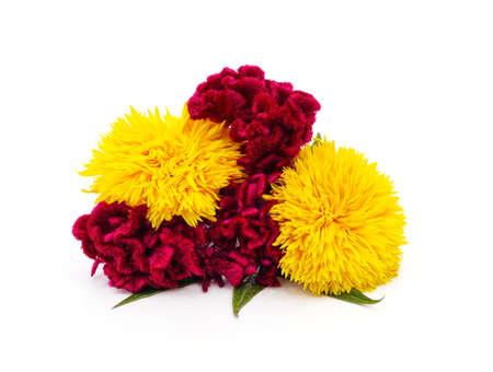 Amaranth with red flowers and sunflowers isolated on a white background.