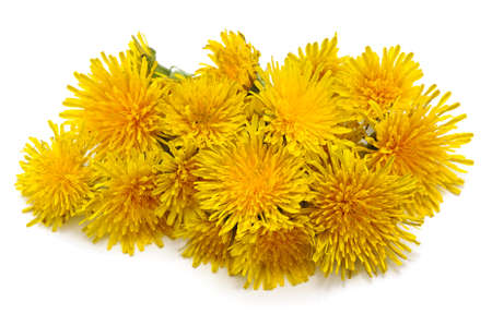 Bouquet of yellow dandelions isolated on a white background.