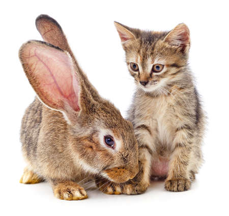 Brown rabbit and brown striped kitten isolated on a white background.
