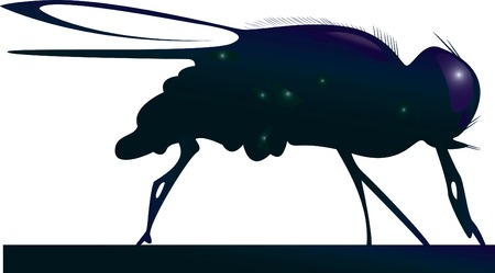 The fly. A vector illustration. Illustration